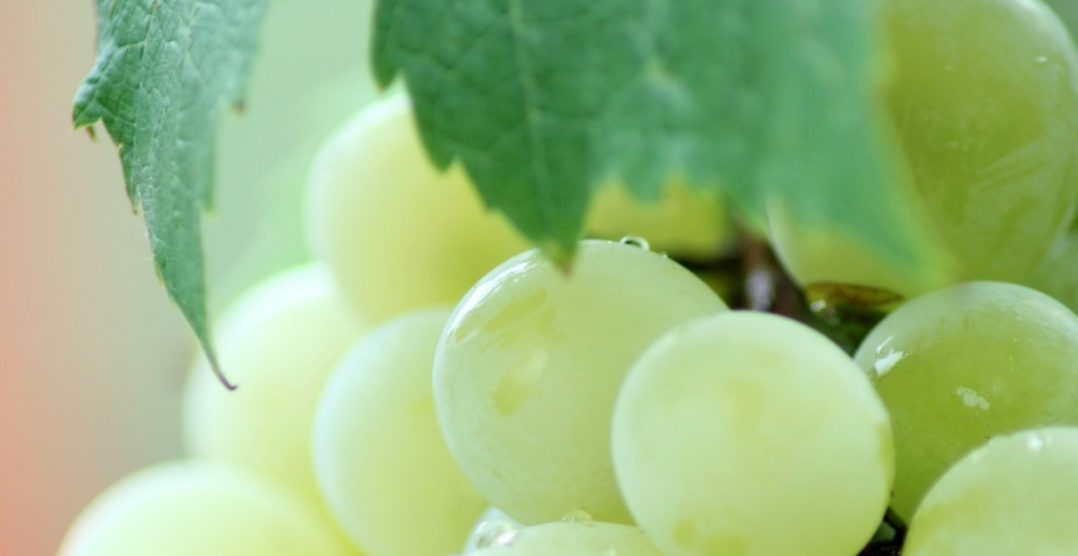 Destilados de uva latinoamericanos